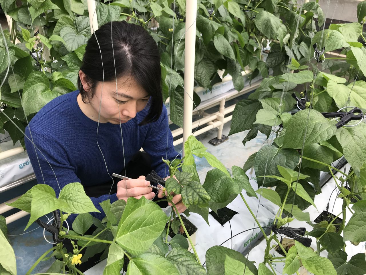 自分が関わった品種が、北海道農業の発展に寄与できたら嬉しいです ...